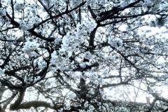 cerisier-gite-jura